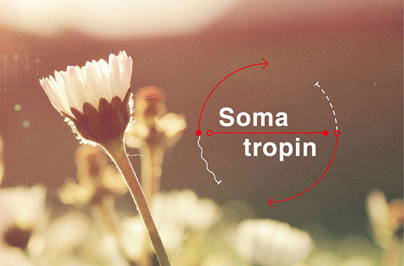somatropin sommer