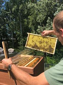 Wir geben Bienen ein Zuhause