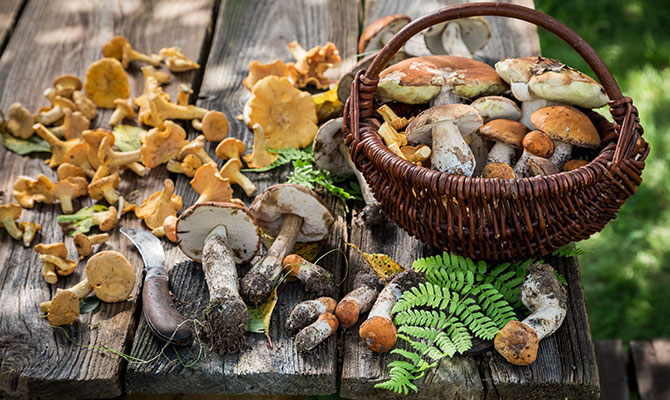 Diese Vitamine stecken in Pilzen