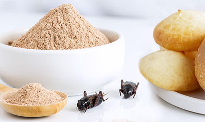 Klassiker mit Extraportion Protein: Brot mit Insektenmehl
